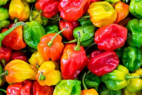 现在辣椒价格大概多少钱一斤?2019年种这五个品种赚钱!